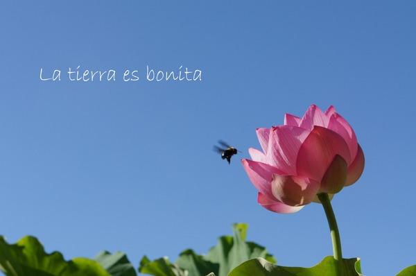 flower10_3.JPG