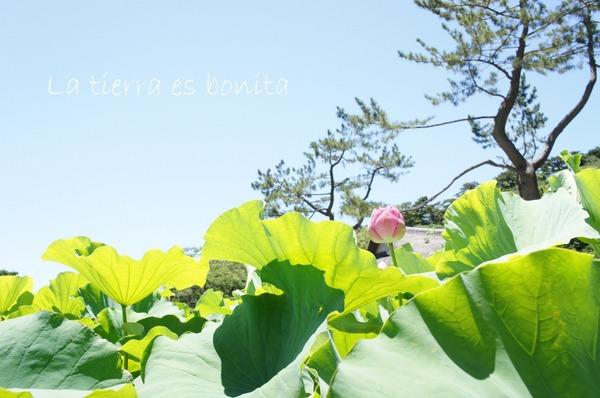 flower10_6.JPG