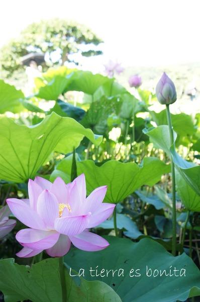 flower10_8.JPG