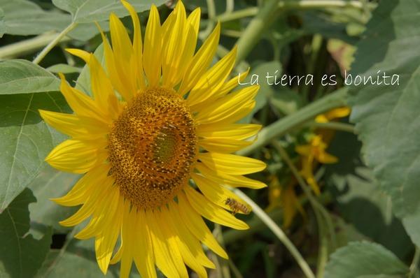 flower12_4.JPG