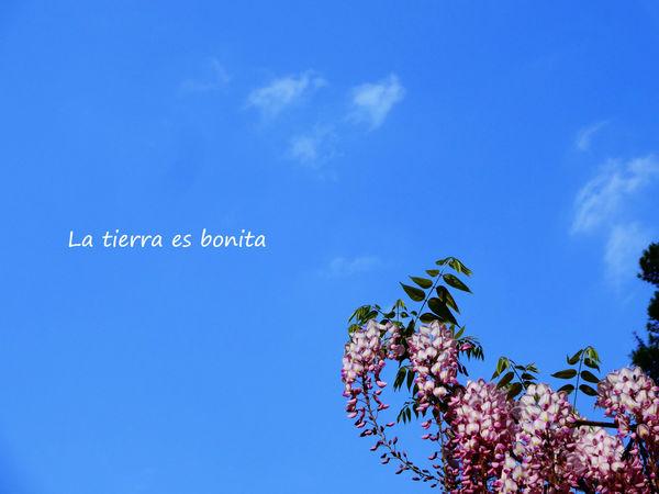 flower36.jpg