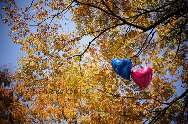 autumn leaves5.jpg