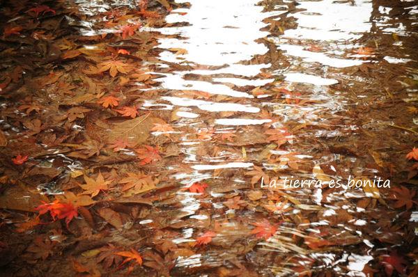 autumn leaves6.jpg