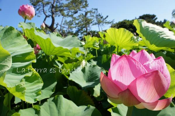 flower10_1.JPG
