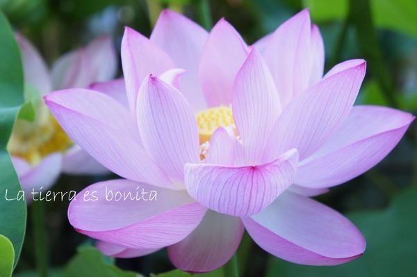 flower10_2.JPG