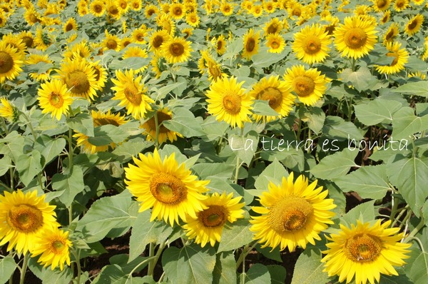 flower12_1.JPG