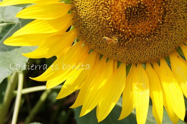 flower12_2.JPG