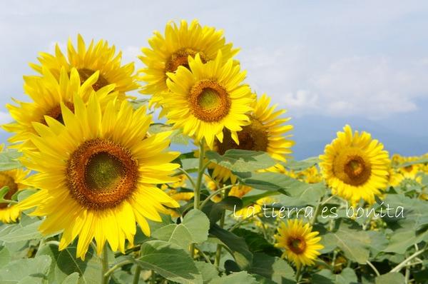 flower12_3.JPG