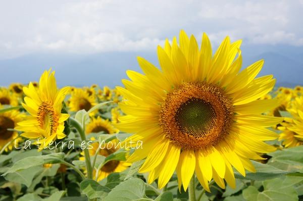 flower12_5.JPG