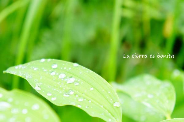 green16.jpg